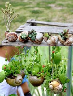 Snail shell mini gardens