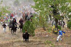 El acto criminal más cobarde y sanguinario para asesinar a un toro en España se llevó a cabo ho...