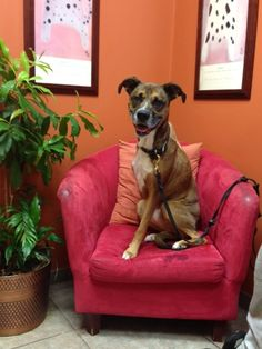 Hyde visits Dr. Karen Becker's Natural Pet clinic. We need more care like #NaturalPet!