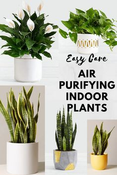 Best easy to maintain Air Purifying and Oxygenating Indoor Plants in decorative planters Indoor Plants Low Light, Best Indoor Plants, Indoor Garden, Sansevieria Trifasciata, Potted Plants Patio, Best Air Purifying Plants, Luxury Gifts For Women, Household Plants