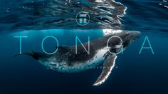 In this 10 minute mini documentary, Thurston Photo takes you on the experience of a lifetime; swimming with the gentle giants of the sea in the beautiful archipelago's…