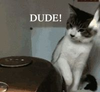 I laughed way too hard at this!!  Poor kitty......