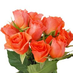 """coral """"alegria"""" spray roses for the arch and boutonnieres"""