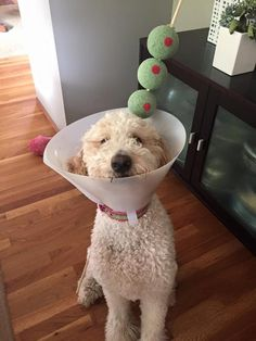 Dogtini | 30 Of The Most Clever Halloween Costumes Of All Time