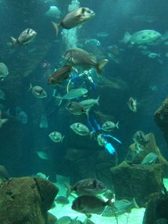 One of the most impressive experiences in Madeira Aquarium is being able to plunge into 500,000 liters of salt water, diving with sharks, rays, morays and hundreds of other fish. Read more: http://www.thetravelmagazine.net/travel-guide-madeira-top-10.html?utm_medium=social&utm_source=pinterest&utm_campaign=blog&utm_content=thetravelmag