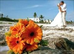 Gerber Daisy Wedding Bouquets - Bing Images