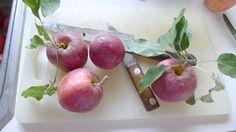 Pink gala applesauce recipe