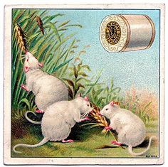 Thread and mice