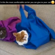 Outdoor Solid Cat Carrier Pouch - List of the most beautiful baby products Cute Funny Animals, Cute Baby Animals, Cute Cats, Funny Cats, I Love Cats, Crazy Cats, Cat Carrier, Cat Furniture, Cat Toys