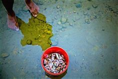 The fished fish... Photo by Eklavya Prasad — National Geographic Your Shot