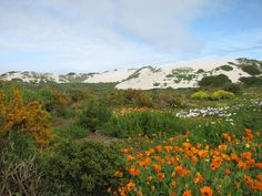 Floral Kingdom, Western Cape National Park, South Africa
