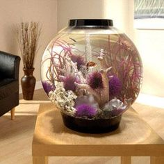biOrb Black Mega Aquarium, beautiful globe tank that lets you see what's going on all around your tank!