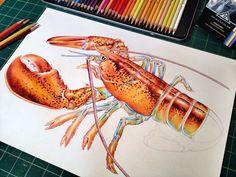 Amazing Drawings, Love Drawings, Colorful Drawings, Pencil Drawings, Art Drawings, Lobster Drawing, Lobster Art, Lobster Tattoo, Sea Life Art