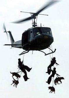 Navy Seal K-9's