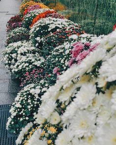 Happy Sunday!!! // хорошего воскресенья! Будете сегодня печь блины? Всем цветов в ленту!!! А я умотала на работу.  #bigspainportugaltrip #andorra #andorralavella #flowers #colorful #travel #trip #journey #adventure #adventurethatislife #lifeofadventure #getoutandexplore #neverstopexploring #letswander #letsgosomewhere #passionpassport  #followmytravel Re-post by Hold With Hope