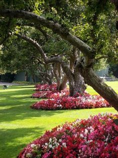 Impatiens planted around old trees.... such a pretty idea!