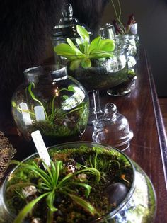 Terrariums  Inspiration for our inquiry project