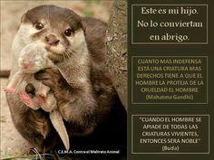 """""""Cuanto más indefensa está una criatura más derechos tiene a que el hombre la proteja de la crueldad del hombre"""""""