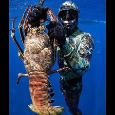 Lobster Hunt Spearfishing