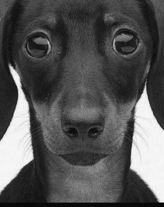 lily-xo via A Dog & His Best Friend