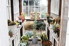 greenhouse with cacti in bauer swirl pots Dream Garden, Home And Garden, Weekend In San Francisco, Greenhouse Shed, Inside Garden, Outdoor Rooms, Indoor Outdoor, Garden Spaces, Cacti And Succulents