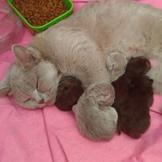 Mother with her kittens...❤