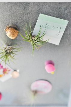 DIY Airplant Magnets