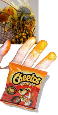 Demonstrate pollination with cheetos -- too smart!