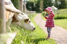 Safari, Cow, Animals, Animales, Animaux, Cattle, Animal, Animais