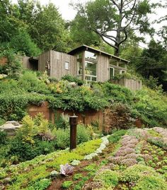 Really nice green roofs on the Mill Valley Cabins, Mill Valley, Calif. - Feldman Architects. Award Winners, Outbuildings, Projects - Custom Home Magazine