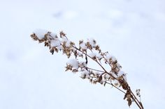 Cold Fusion, Winter Scenery, Plants, Plant, Planets
