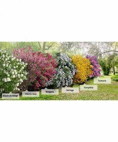 Winterharte Kletterpflanzen-kollektion, 2 Containerpflanzen Bluhende Hangepflanzen Blumenampeln Ampelpflanzen Ideen