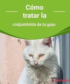 Cómo tratar la conjuntivitis de tu gato En el siguiente artículo te vamos a dar unos sencillos consejos para tratar la conjuntivitis de tu gato y sobre todo cómo detectarla a tiempo.