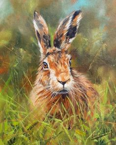 HARE Superb New DAVID STRIBBLING  Oil Painting
