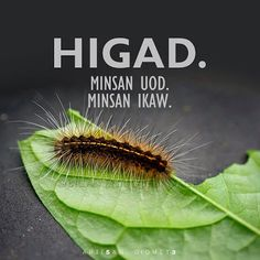 Higad. #patama #funny #humor Tagalog Qoutes, Tagalog Quotes Hugot Funny, Memes Pinoy, Pinoy Quotes, Best Quotes, Love Quotes, Patama Quotes, Hugot Lines, Pick Up Lines