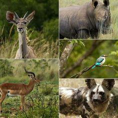 In Zuid-Afrika wordt het nu voorjaar. Wat een fijne gedachte... #photography #travelphotography #traveller #canon #canonnederland #canon_photos #fotocursus #fotoreis #travelblog #reizen #reisjournalist #travelwriter#fotoworkshop #willemlaros.nl #reisfotografie #landschapsfotografie #natuurfotografie #nature #africa #southafrica #fb