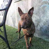 Winter Haven Fl Hound Unknown Type Meet Ally A Dog For