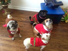 Merry Christmas from Sushi, Lola, Abby and Teea