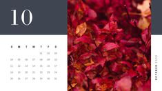 Scroll down to find the best free printable October 2020 calendars and get them right now. October Calendar Printable, Free Calendar, Free Printable Calendar, Calendar 2020, Free Printables, Halloween Date, State Holidays, Pumpkin Farm, All Saints Day