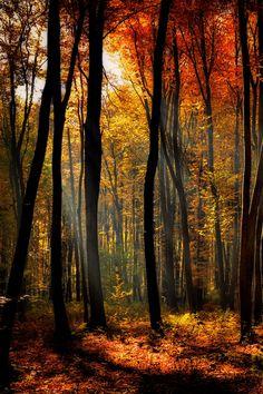 Autumn forest  by Katarzyna Soluch