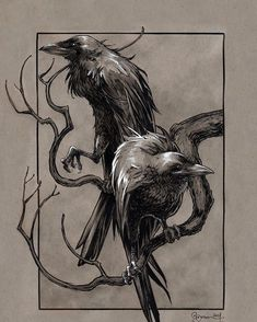 Hugin and Munin #norsemythology #scandinavianmythology #vikings #viking  #valhalla #odin #heimdall #pagan #mythology #jotunheim #huldra #eikthyrnir #berserker #berserkers #warrior #warriors #midgard #asgard #jormungand #fenrir #loki #thor  #valkyrie #gameofthrones #ratatosk #shieldmaiden #shieldwall #axe #ragnarok #mjolnir