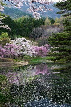 "renamonkalou:  ""This is spring of Japan   Kazuhiro Yashima  """