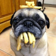 5 surprising things from your food a dog can eat | The Planet of Pets