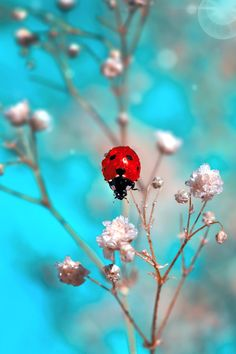 raindropsonroses-65: RED POINT ... by Mustafa Öztürk on Fivehundredpx