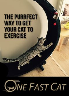 Get Your Cat Exercise with the Exercise Wheel by One Fast Cat