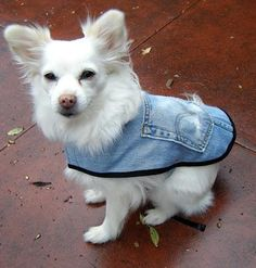 Denim is well suited to use when making DIY dog accessories. Here is a round up of some of the great things you can make for your dog out of old jeans. Yorkshire Terriers, Diy Disfraces, Dog Coat Pattern, Dog Clothes Patterns, Dog Jacket, Cape Jacket, Old Jeans, Ragged Jeans, Animal Projects