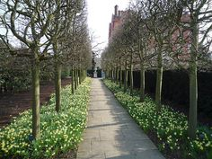 Another early Spring look at pleached hedges. via