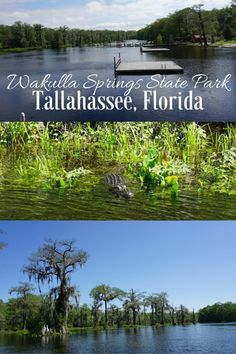 Things to do on a family visit to Edward Ball Wakulla Springs State Park in Tallahassee, Florida | Gone with the Family