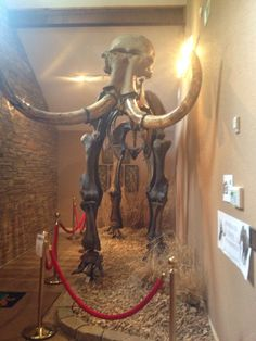 Mammoth at the Native American Museum in Bentonville, Ar.
