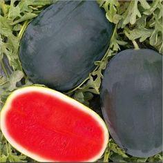 NANDA AGRO - Wholesaler, Supplier, Exporter and Trader of Fresh Watermelon based in Solan, Himachal Pradesh. Watermelon, Content, Fresh
